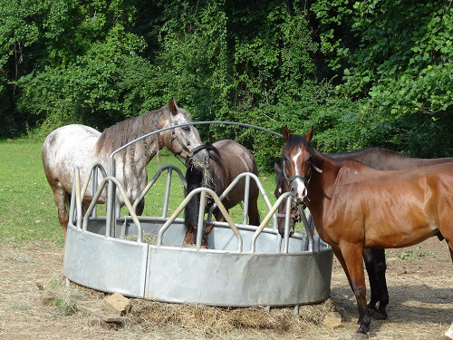 Horses at Feeder Photo